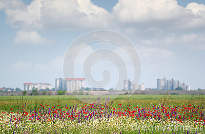 Landscape with wild flowers