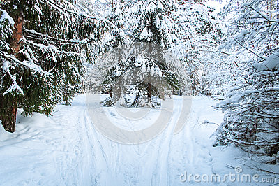 Landscape of winter forest.