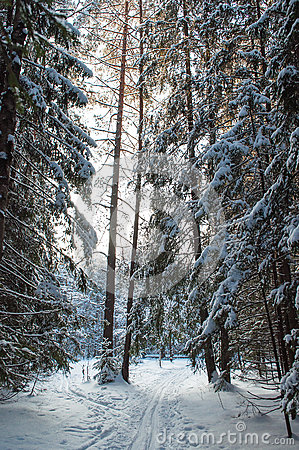 Landscape of winter forest.