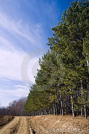 Free Landscape With A Row Of Firs Royalty Free Stock Photos - 3817618
