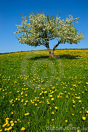 Free Landscape With Apple Tree Stock Photos - 2502403