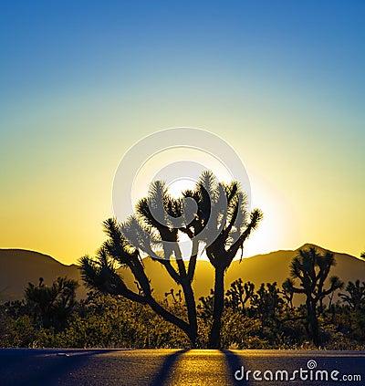 Free Landscape With Joshua Trees Royalty Free Stock Photos - 46572108