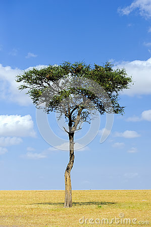 Free Landscape With Tree In Africa Royalty Free Stock Photos - 87336478