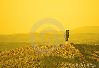 Landscape in yellow sunset light