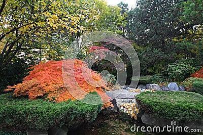 Landscaped Japanese garden