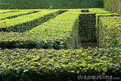 Landscaped maze in park