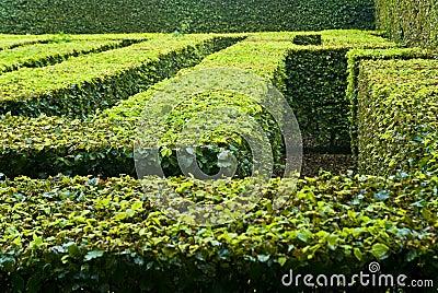 Landscaped maze in park