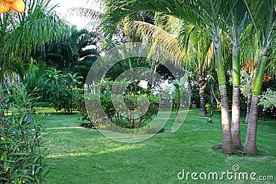 Landscaped tropical garden