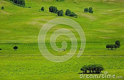 Landscapes of Grassland