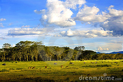 Landscapes of Nakuru