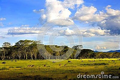 Landscapes of Nakuru