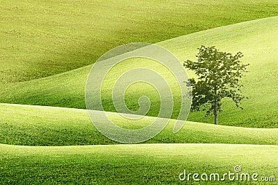 Landscapes view