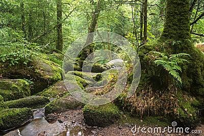 landschaft von becky falls wasserfall auf nationalpark englisch dartmoor stockbilder bild. Black Bedroom Furniture Sets. Home Design Ideas
