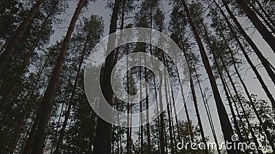 Landskapträd på glidaren stock video