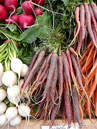 Landwirte vermarkten purpurrote Karotten