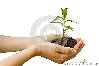 Landwirtschaft. Anlage in einer Hand