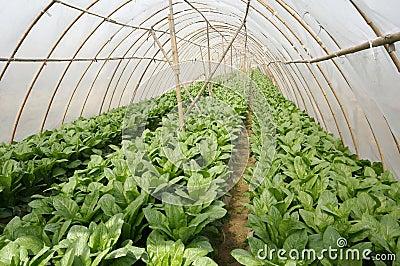Landwirtschaftszeltbauernhof