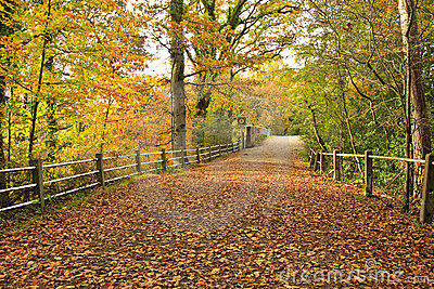 Lane Over Weak Bridge