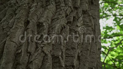 Lange die bomen op witte achtergrond worden ge?soleerd stock videobeelden