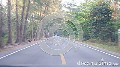 Lange reis aan bestemming met pijnboom het bos omringen Het reizen door auto stock footage
