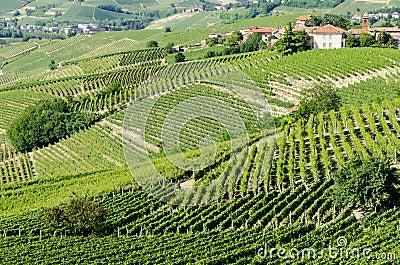 Langhe, hilly wine region in Piedmont, Italy