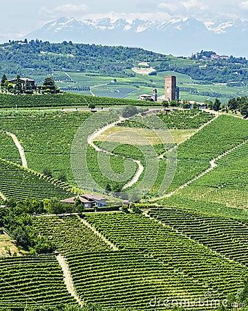 Langhe, vineyards