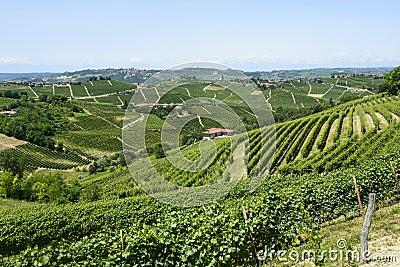 Langhe, wijngaarden