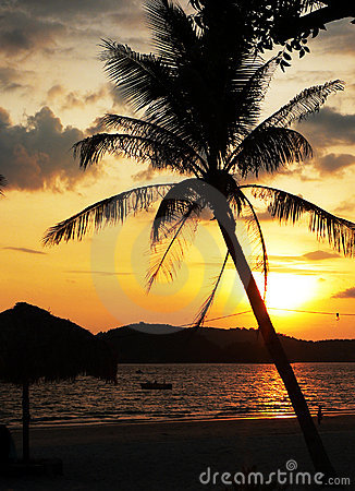 Langkawi Island. Tilted Palm Tree Sunset