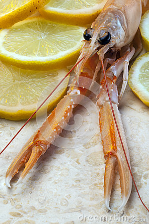 Langoustine or Norwegian Lobster