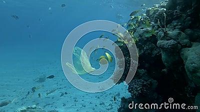 Langsame Bewegung, verworfen gelbe Plastiktüte mit Schule der gelben Fische schwimmen langsam in der Nähe eines Korallenriffs in  stock footage
