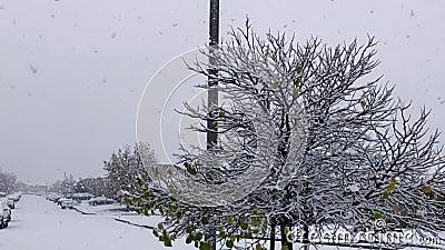 Langsamer Schneefall im Winter stock video
