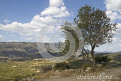 Languedoc - panorama