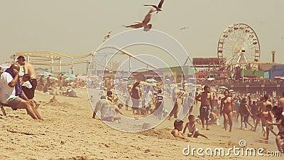Langzame motie van zeemeeuwen en strandgoers stock footage