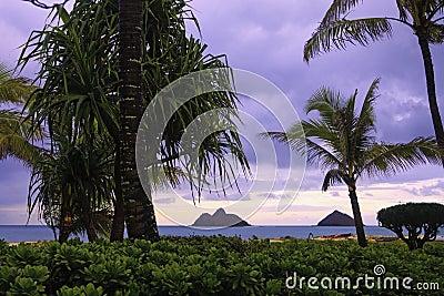 Lanikai beach with palm trees