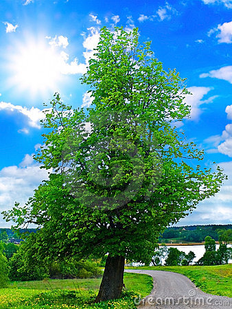 Lanscape with tree