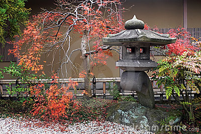 Lanterne japonaise et arbre d érable automnal