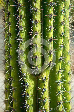 Lanzarote Guatiza cactus garden