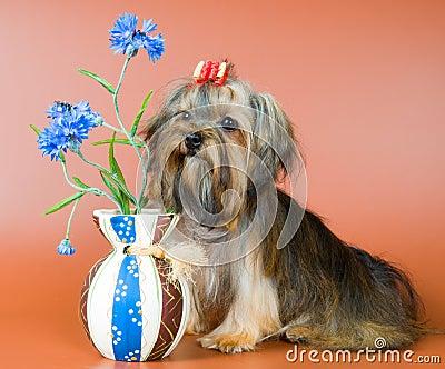 Lap-dog avec un vase