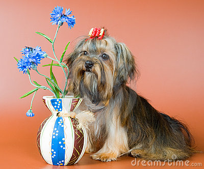 Lap-dog com um vaso