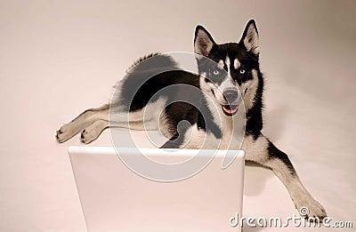 Lap top dog