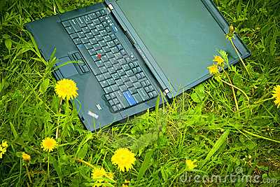 Laptop and dandelions