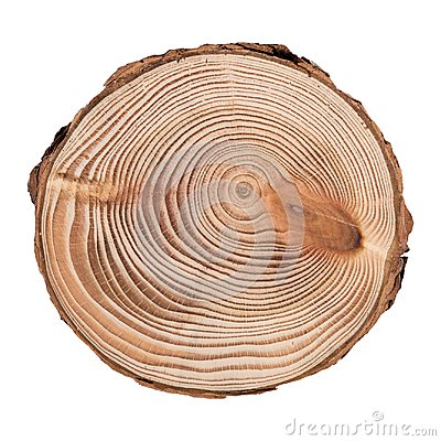 Free Larch Cross Section Of Tree Trunk Showing Rings Isolated On White Background. Stock Image - 109519901
