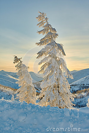 Free Larch In Snow In Mountains. Winter. A Decline. Evening. Kolyma Royalty Free Stock Image - 63323836