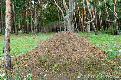 Large anthill