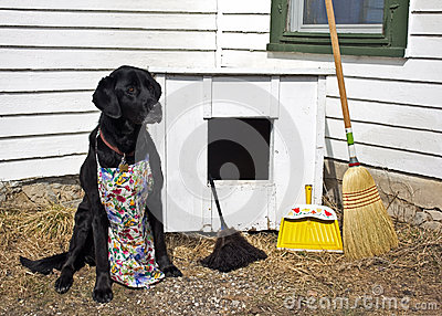 Spring Cleaning the Dog House