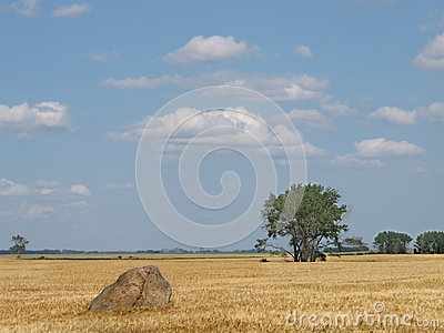 Large boulder in a prairie wheat field.