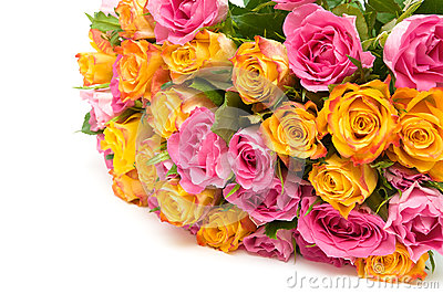 A large bouquet of roses on a white background