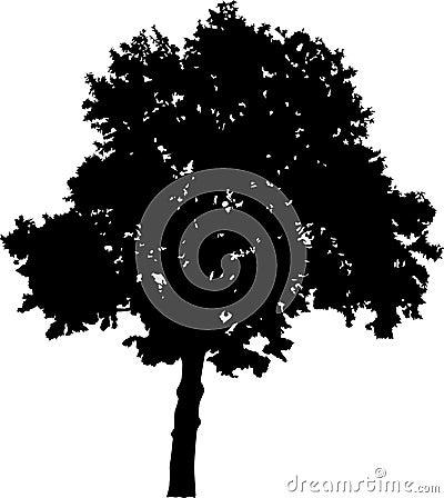 Large broad-leaved tree silhouette
