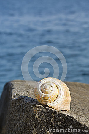 Free Large Conch On A Rock Royalty Free Stock Images - 31450499