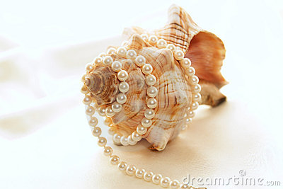 Large conch with pearls 3